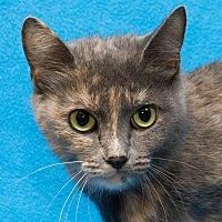 Adopt A Pet :: Roxy - Westland, MI