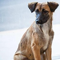 Adopt A Pet :: Blossom - Del Rio, TX