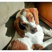 Adopt A Pet :: Sadie-Courtesy Post - North Olmsted, OH