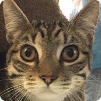 Adopt A Pet :: Grover - Winchester, CA