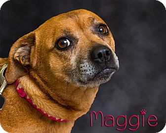 Terrier (Unknown Type, Medium) Mix Dog for adoption in Somerset, Pennsylvania - Maggie