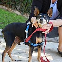 Adopt A Pet :: Ramsey - Gilbert, AZ