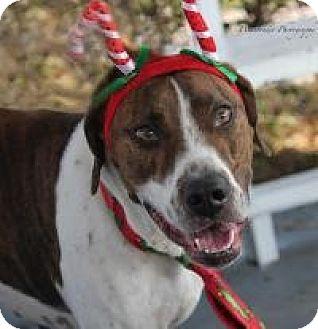 Hound (Unknown Type) Mix Dog for adoption in New Smyrna Beach, Florida - Frankie