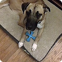 Adopt A Pet :: Dega ***COURTESY POST*** - Dillsburg, PA