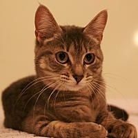 Adopt A Pet :: Princess Leia - Nottingham, MD