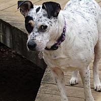 Adopt A Pet :: Sunny - Washington, DC