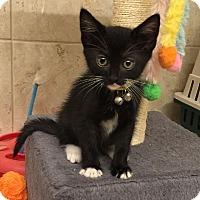 Adopt A Pet :: Twilight - Dallas, TX