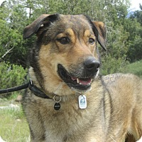 Adopt A Pet :: Jack - Ridgway, CO