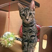 Adopt A Pet :: Suspect - Marina del Rey, CA