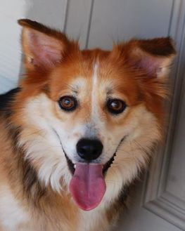 Collie Mix Dog for adoption in Toccoa, Georgia - Charlotte