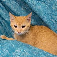 Adopt A Pet :: Cheesie Mac - Addison, IL