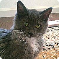 Adopt A Pet :: Manny - Escondido, CA