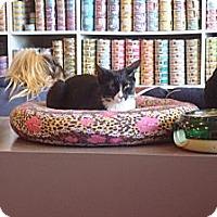 Adopt A Pet :: Noelle - Brooklyn, NY