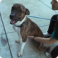 Adopt A Pet :: Klohe - Miami, FL