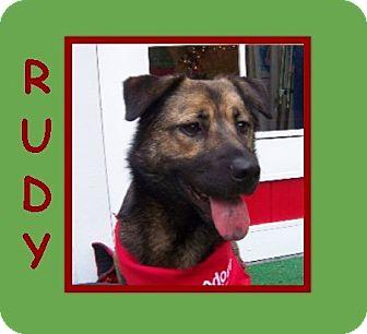 German Shepherd Dog/Shepherd (Unknown Type) Mix Dog for adoption in Dallas, North Carolina - RUDY