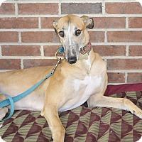 Adopt A Pet :: Dolly - Lexington, SC