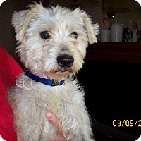 Adopt A Pet :: J Sparky - Lafayette, LA