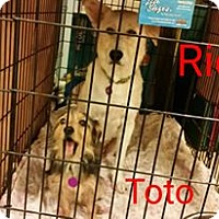 Adopt A Pet :: Roo Roo - Crocker, MO