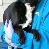 Adopt A Pet :: Camilla - Ozone Park, NY