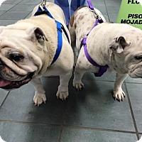Adopt A Pet :: Gus - Columbus, OH