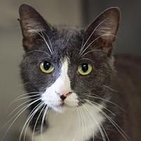 Adopt A Pet :: JESSE - Kyle, TX