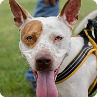 Adopt A Pet :: Pretty GIrl - Greenwood, SC