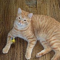 Adopt A Pet :: Thunder - Delmont, PA