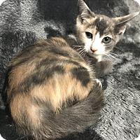Adopt A Pet :: Jelly Bean - Dallas, TX