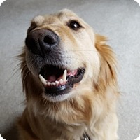 Adopt A Pet :: Buddy - Adoption Pending - Tipp City, OH