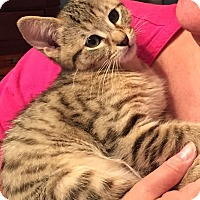 Adopt A Pet :: Douglas - Marietta, GA