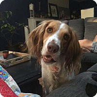 Adopt A Pet :: WA/Jup - Seattle, WA