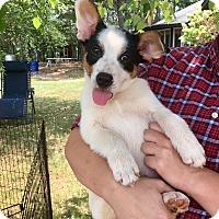 Adopt A Pet :: Rudy - Harrisburg, PA