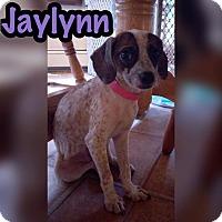Adopt A Pet :: Jaylynn - Smithtown, NY