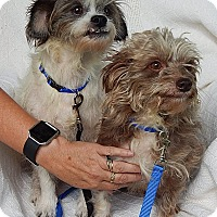 "Adopt A Pet :: Opie & Andy ""Lil' Sweeties!"" - Burlington, VT"