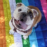 Adopt A Pet :: Starla - Santa Ana, CA