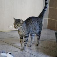 Adopt A Pet :: Winston - Wausau, WI
