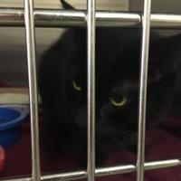 Adopt A Pet :: Romeo - Santa Paula, CA