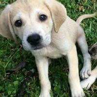 Adopt A Pet :: Chris - Gainesville, FL