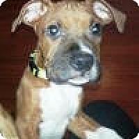 Adopt A Pet :: Zeus - North Haven, CT