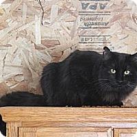 Adopt A Pet :: Black Jack - Rawlins, WY