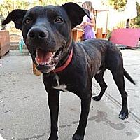 Adopt A Pet :: Flynn Rider - Concord, CA
