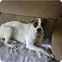 Adopt A Pet :: Kenzie - Douglas, MA