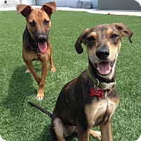 Adopt A Pet :: Coco - Orange, CA
