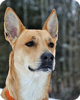 German Shepherd Dog Mix Dog for adoption in International Falls, Minnesota - Isey