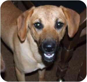 Hound (Unknown Type)/Terrier (Unknown Type, Medium) Mix Puppy for adoption in Aledo, Illinois - Daisy