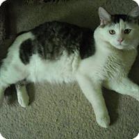 Adopt A Pet :: Crown - Arlington, VA