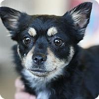 Adopt A Pet :: Mary Jane - Canoga Park, CA