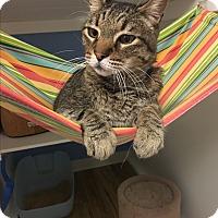 Adopt A Pet :: Montgomery - Novato, CA