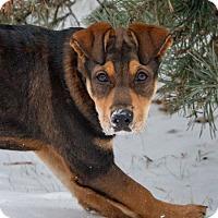 Husky/Terrier (Unknown Type, Medium) Mix Dog for adoption in Edmonton, Alberta - Lilo Pelekai