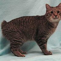 Adopt A Pet :: Bobby - Redwood Falls, MN